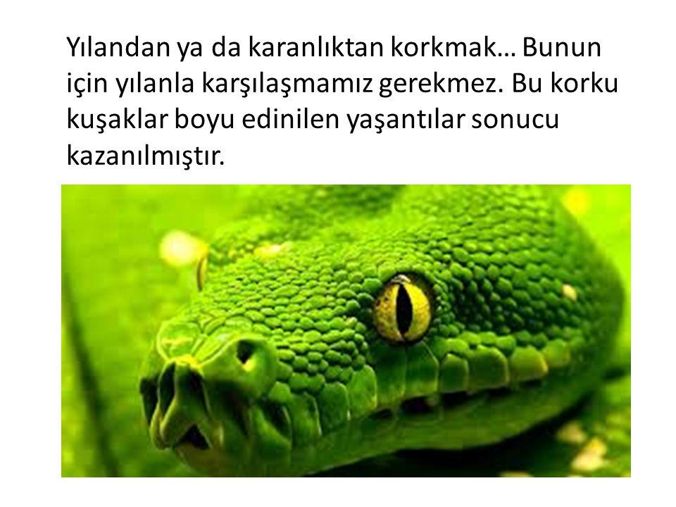 Yılandan ya da karanlıktan korkmak… Bunun için yılanla karşılaşmamız gerekmez. Bu korku kuşaklar boyu edinilen yaşantılar sonucu kazanılmıştır.