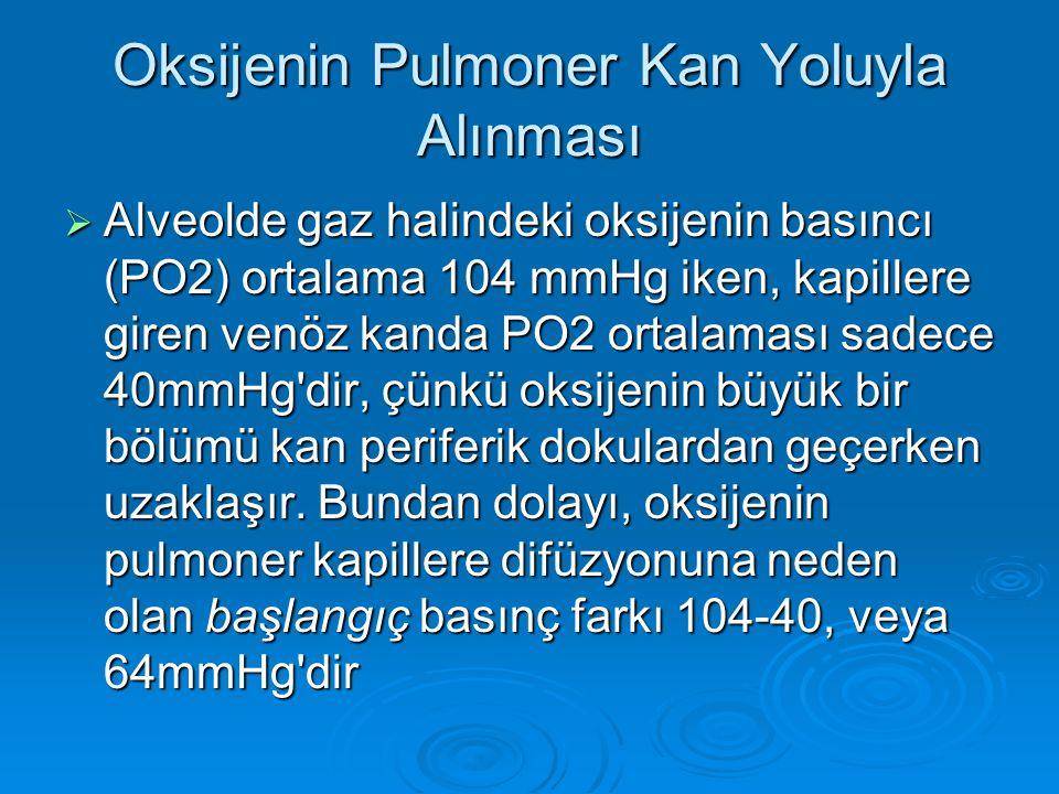Oksijenin Pulmoner Kan Yoluyla Alınması  Alveolde gaz halindeki oksijenin basıncı (PO2) ortalama 104 mmHg iken, kapillere giren venöz kanda PO2 ortal