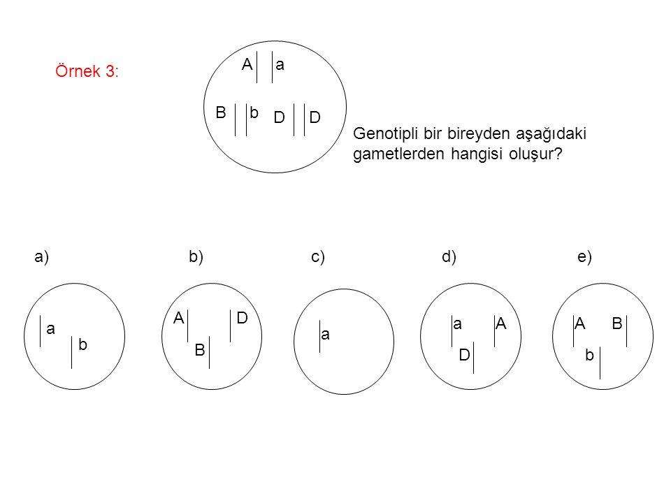 Örnek 3: A a B b D Genotipli bir bireyden aşağıdaki gametlerden hangisi oluşur? a b A B D a aA D A b B a) b) c) d) e)