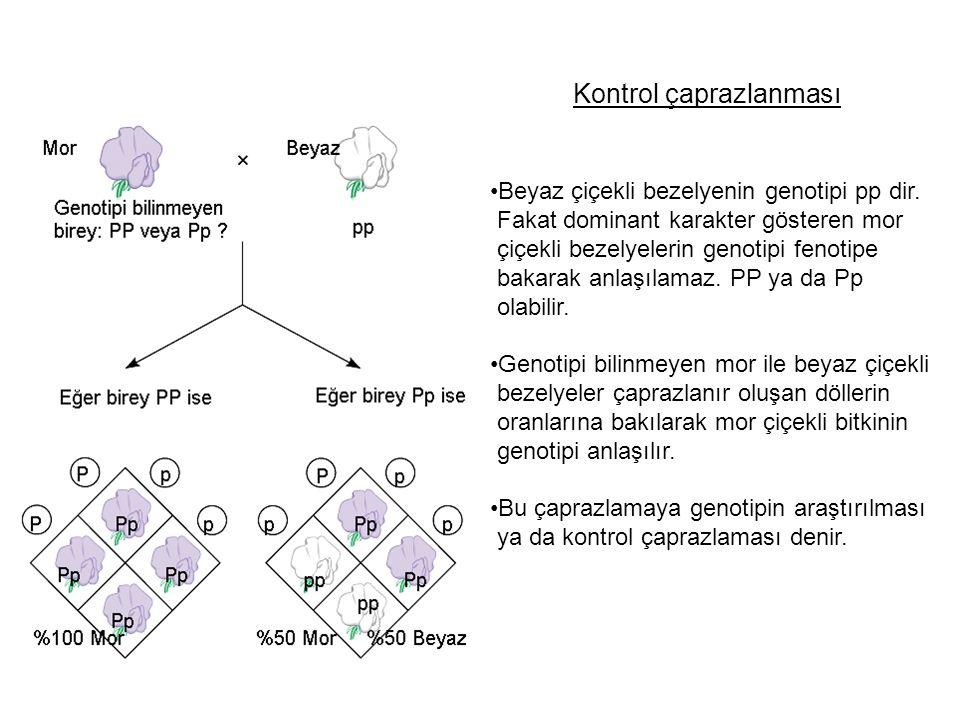 Kontrol çaprazlanması Beyaz çiçekli bezelyenin genotipi pp dir. Fakat dominant karakter gösteren mor çiçekli bezelyelerin genotipi fenotipe bakarak an