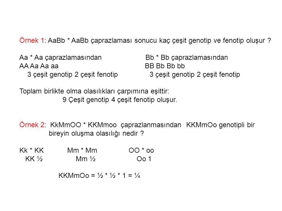 Örnek 1: AaBb * AaBb çaprazlaması sonucu kaç çeşit genotip ve fenotip oluşur ? Aa * Aa çaprazlamasından Bb * Bb çaprazlamasından AA Aa Aa aa BB Bb Bb