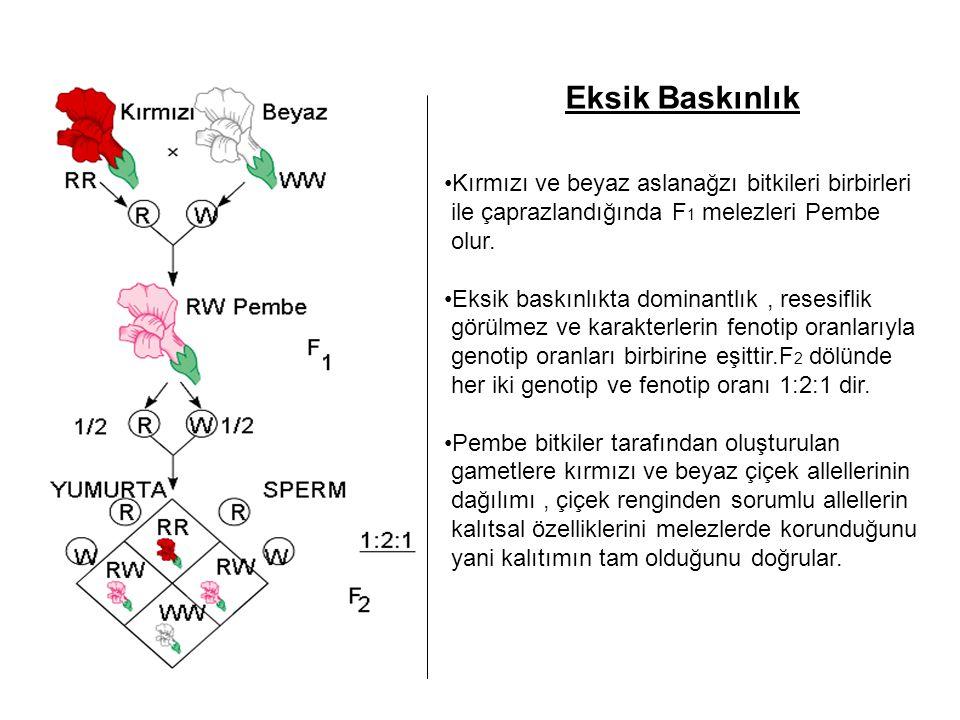 Eksik Baskınlık Kırmızı ve beyaz aslanağzı bitkileri birbirleri ile çaprazlandığında F 1 melezleri Pembe olur. Eksik baskınlıkta dominantlık, resesifl
