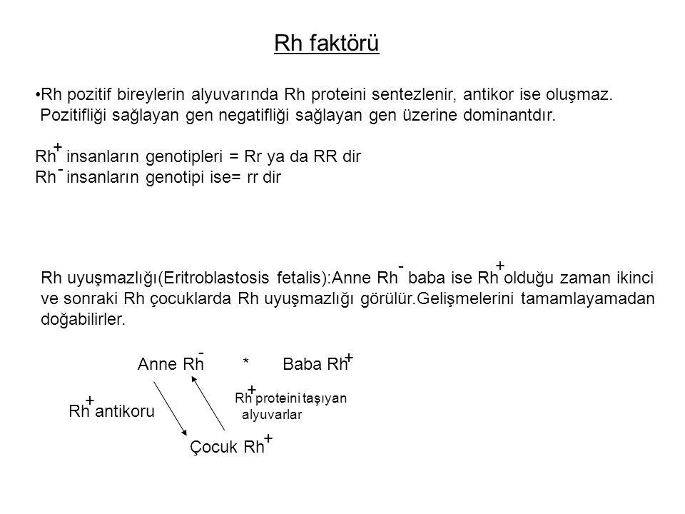 Rh faktörü Rh pozitif bireylerin alyuvarında Rh proteini sentezlenir, antikor ise oluşmaz. Pozitifliği sağlayan gen negatifliği sağlayan gen üzerine d