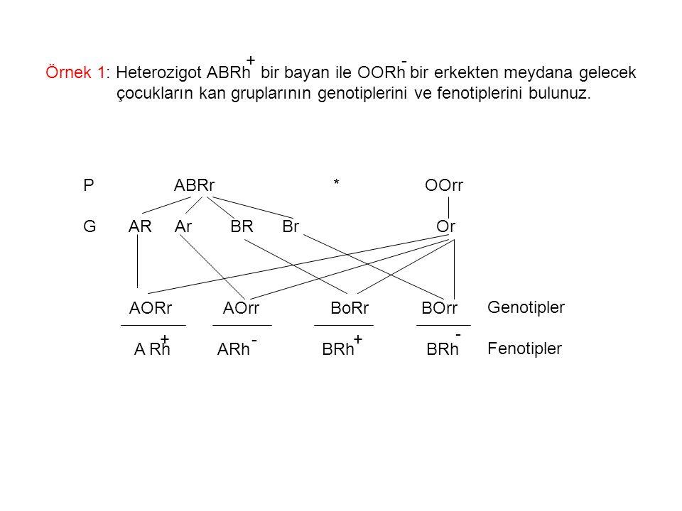 Örnek 1: Heterozigot ABRh bir bayan ile OORh bir erkekten meydana gelecek çocukların kan gruplarının genotiplerini ve fenotiplerini bulunuz. P ABRr *