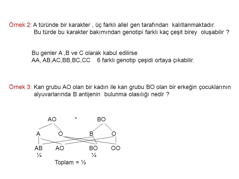 Örnek 2: A türünde bir karakter, üç farklı allel gen tarafından kalıtlanmaktadır. Bu türde bu karakter bakımından genotipi farklı kaç çeşit birey oluş