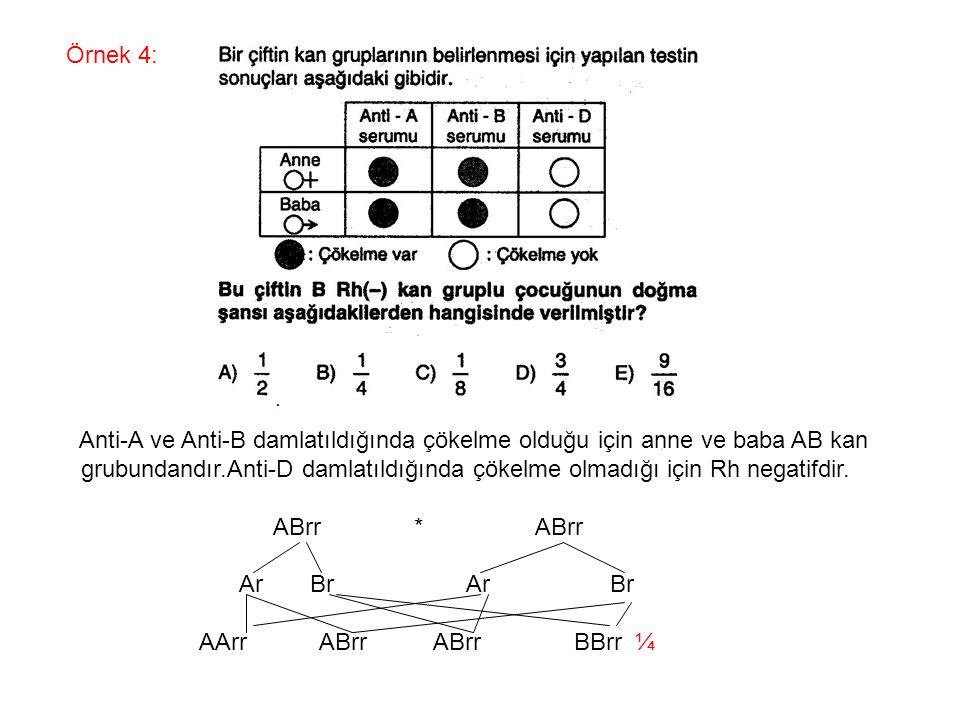 Örnek 4: Anti-A ve Anti-B damlatıldığında çökelme olduğu için anne ve baba AB kan grubundandır.Anti-D damlatıldığında çökelme olmadığı için Rh negatif