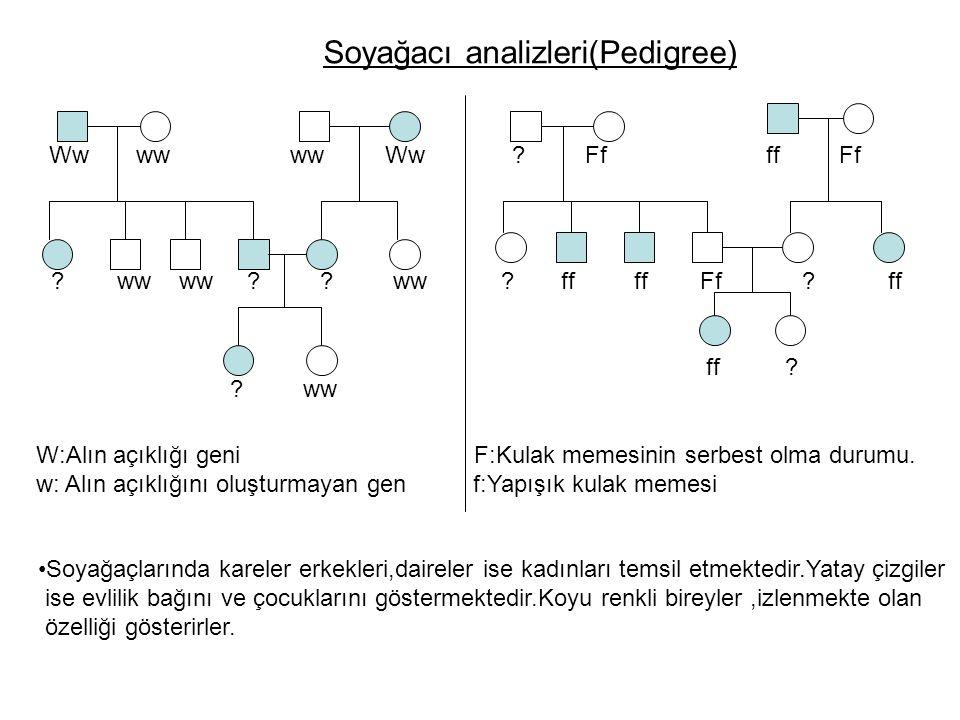 Soyağacı analizleri(Pedigree) Soyağaçlarında kareler erkekleri,daireler ise kadınları temsil etmektedir.Yatay çizgiler ise evlilik bağını ve çocukları
