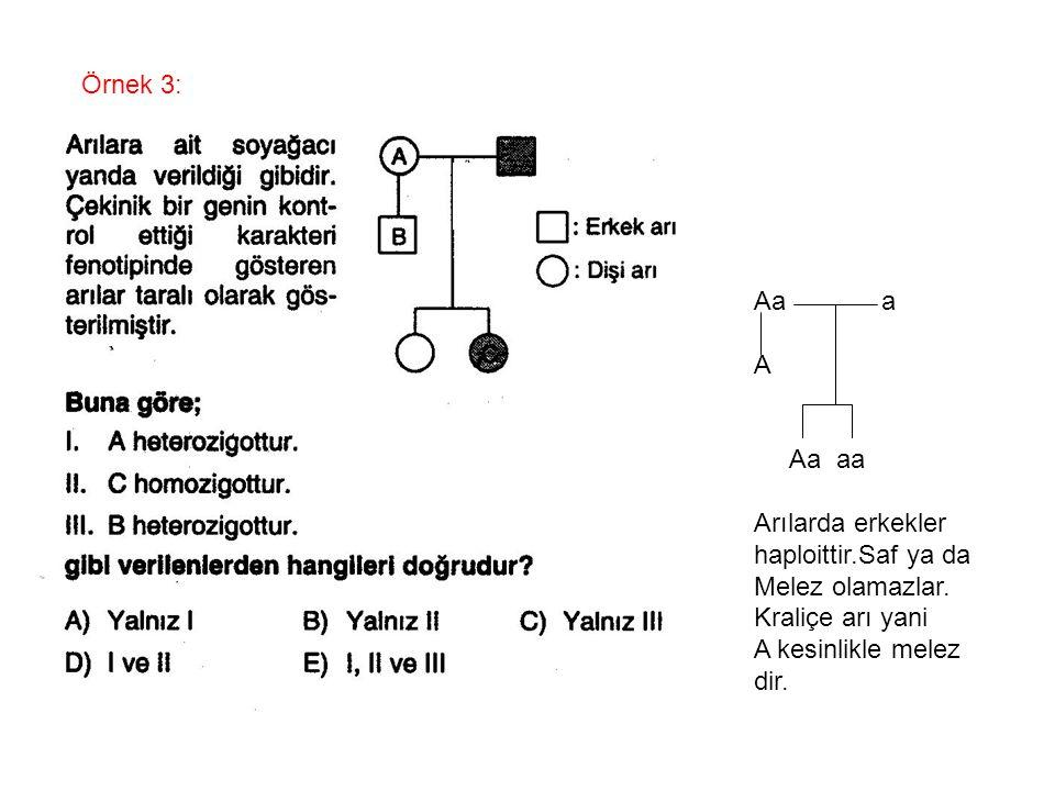 Örnek 3: Aa a A Aa aa Arılarda erkekler haploittir.Saf ya da Melez olamazlar. Kraliçe arı yani A kesinlikle melez dir.