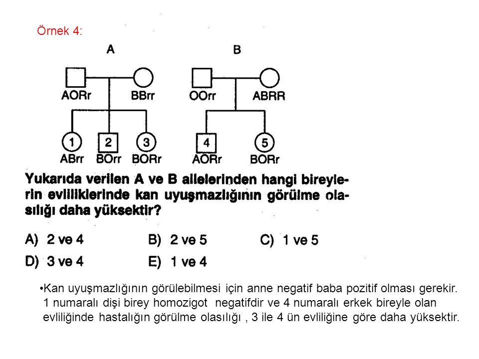 Örnek 4: Kan uyuşmazlığının görülebilmesi için anne negatif baba pozitif olması gerekir. 1 numaralı dişi birey homozigot negatifdir ve 4 numaralı erke