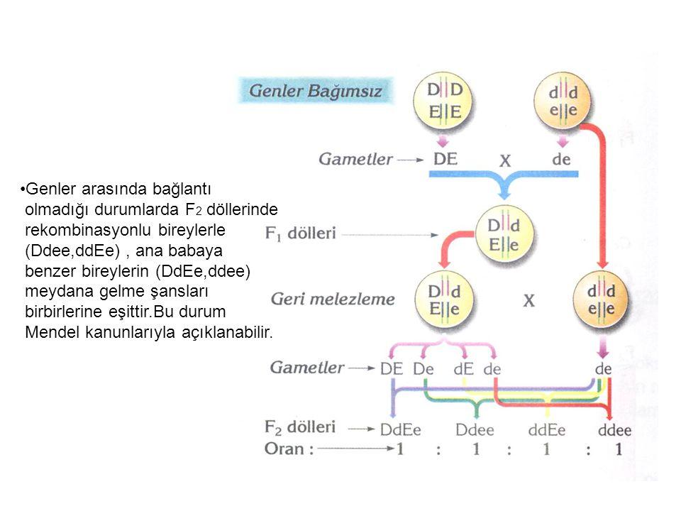 Genler arasında bağlantı olmadığı durumlarda F 2 döllerinde rekombinasyonlu bireylerle (Ddee,ddEe), ana babaya benzer bireylerin (DdEe,ddee) meydana g