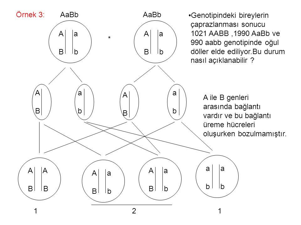 Örnek 3: * A a B b A a B b AaBb AaBb Genotipindeki bireylerin çaprazlanması sonucu 1021 AABB,1990 AaBb ve 990 aabb genotipinde oğul döller elde ediliy