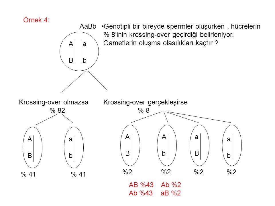 Örnek 4: A a B b Genotipli bir bireyde spermler oluşurken, hücrelerin % 8'inin krossing-over geçirdiği belirleniyor. Gametlerin oluşma olasılıkları ka