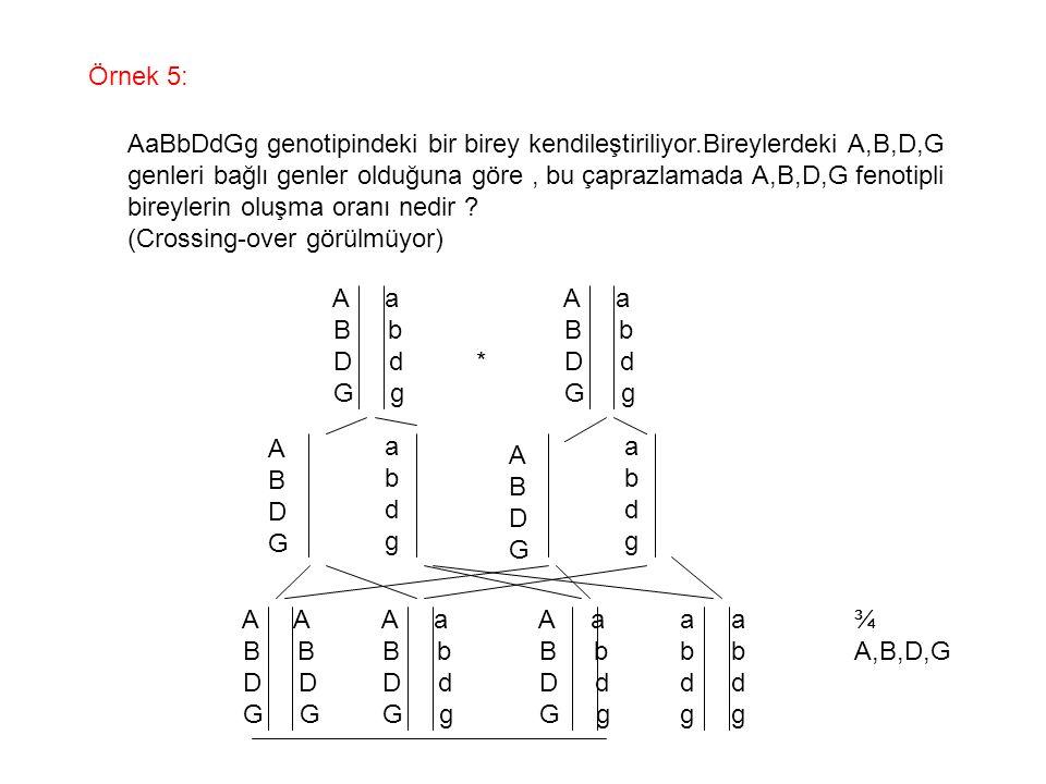 Örnek 5: AaBbDdGg genotipindeki bir birey kendileştiriliyor.Bireylerdeki A,B,D,G genleri bağlı genler olduğuna göre, bu çaprazlamada A,B,D,G fenotipli