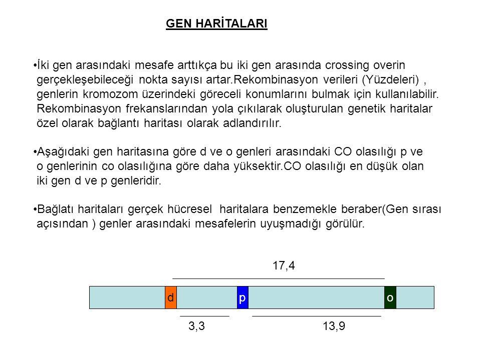 GEN HARİTALARI İki gen arasındaki mesafe arttıkça bu iki gen arasında crossing overin gerçekleşebileceği nokta sayısı artar.Rekombinasyon verileri (Yü