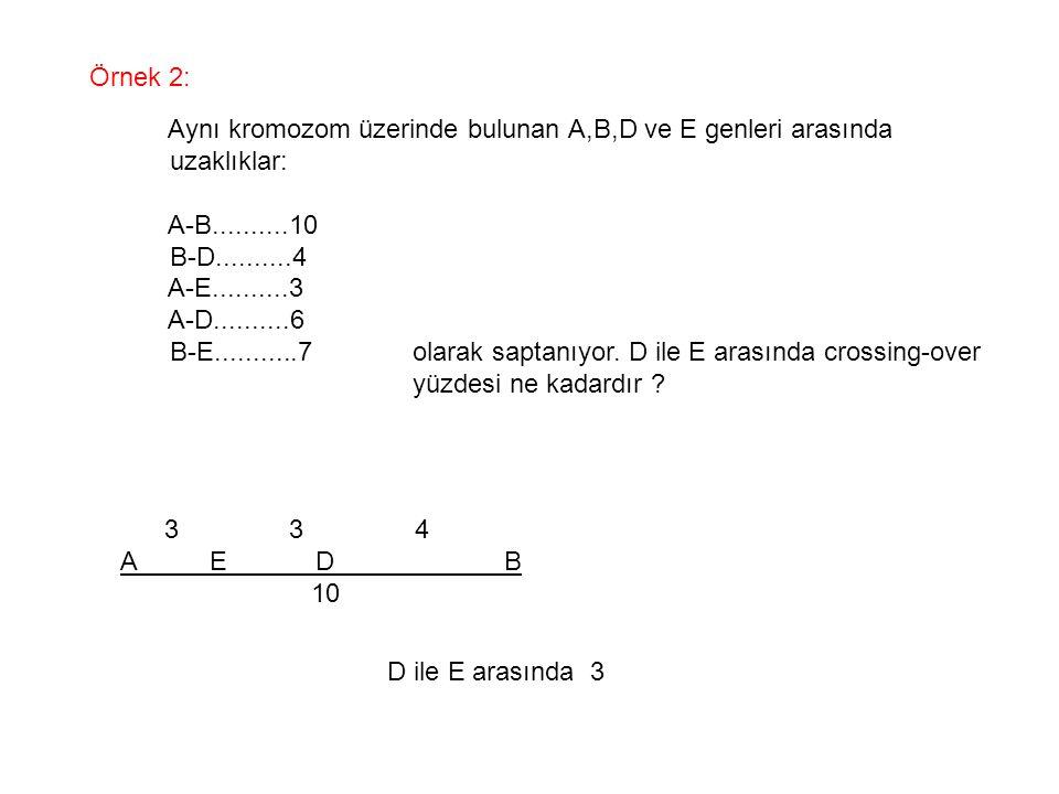 Örnek 2: Aynı kromozom üzerinde bulunan A,B,D ve E genleri arasında uzaklıklar: A-B..........10 B-D..........4 A-E..........3 A-D..........6 B-E......