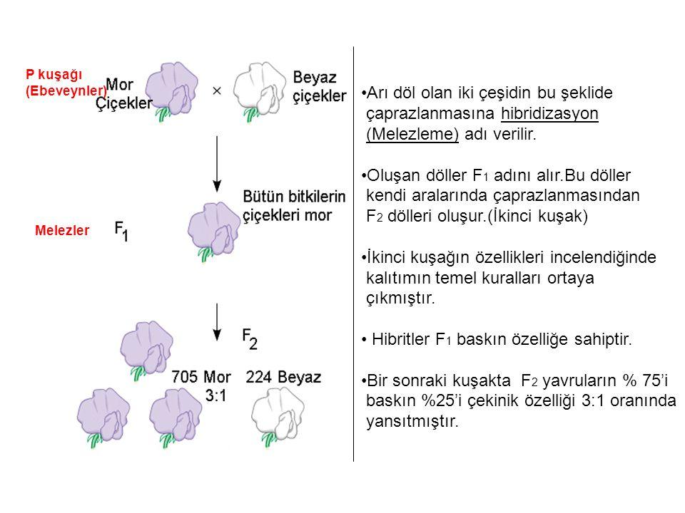 Mendel kuralları Genlerin alternatif formları vardır(Allel) ve her canlı her allelin birini anne ve babasından alır.Yumurta ve sperm bu allel çiftlerinden sadece bir tanesini taşır.