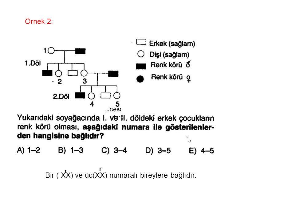 Örnek 2: Bir ( XX) ve üç(XX) numaralı bireylere bağlıdır. r r