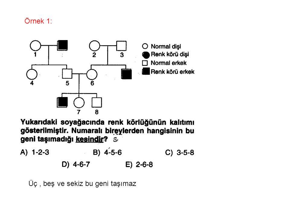 Örnek 1: Üç, beş ve sekiz bu geni taşımaz