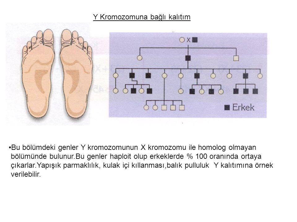 Y Kromozomuna bağlı kalıtım Bu bölümdeki genler Y kromozomunun X kromozomu ile homolog olmayan bölümünde bulunur.Bu genler haploit olup erkeklerde % 1