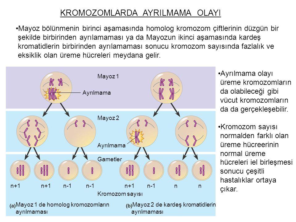 KROMOZOMLARDA AYRILMAMA OLAYI Mayoz bölünmenin birinci aşamasında homolog kromozom çiftlerinin düzgün bir şekilde birbirinden ayrılamaması ya da Mayoz
