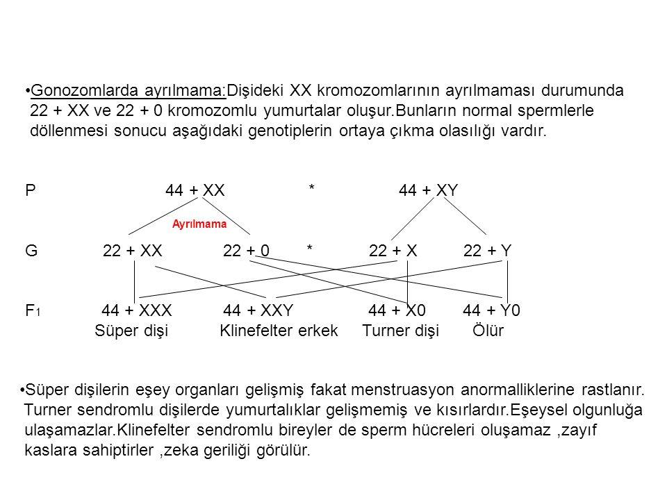 Gonozomlarda ayrılmama:Dişideki XX kromozomlarının ayrılmaması durumunda 22 + XX ve 22 + 0 kromozomlu yumurtalar oluşur.Bunların normal spermlerle döl