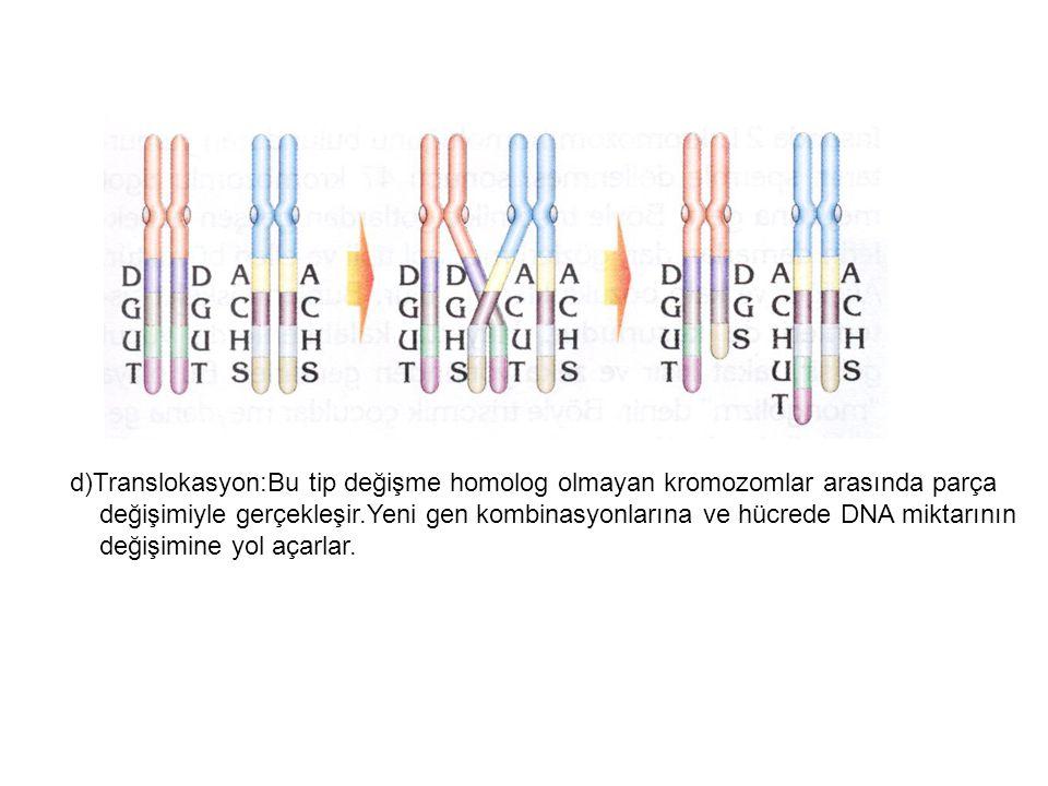 d)Translokasyon:Bu tip değişme homolog olmayan kromozomlar arasında parça değişimiyle gerçekleşir.Yeni gen kombinasyonlarına ve hücrede DNA miktarının