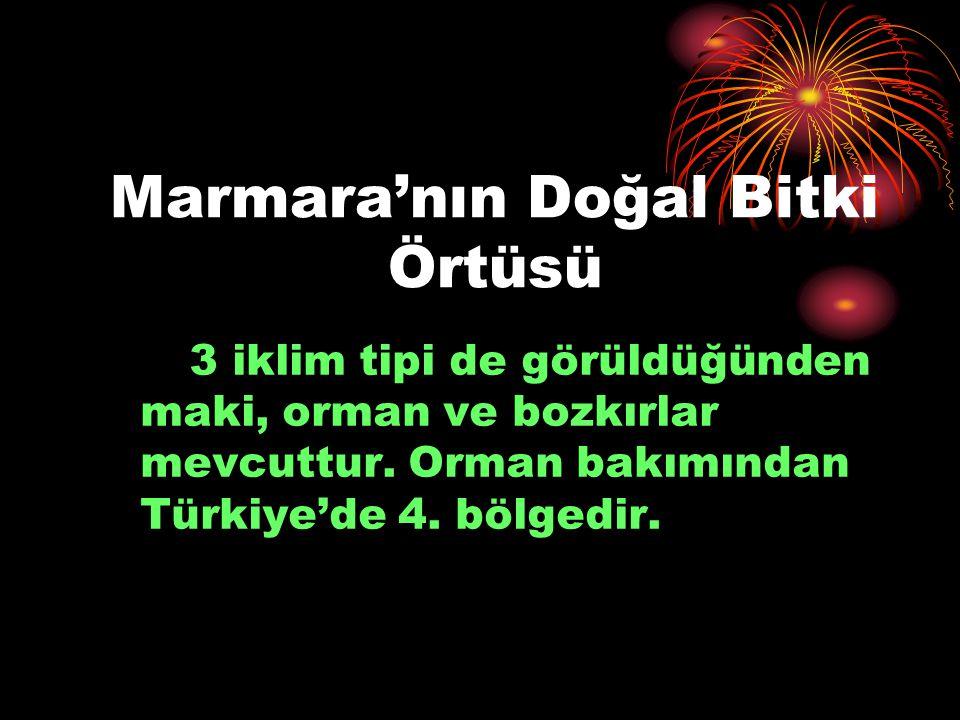 Marmara'nın Doğal Bitki Örtüsü 3 iklim tipi de görüldüğünden maki, orman ve bozkırlar mevcuttur. Orman bakımından Türkiye'de 4. bölgedir.