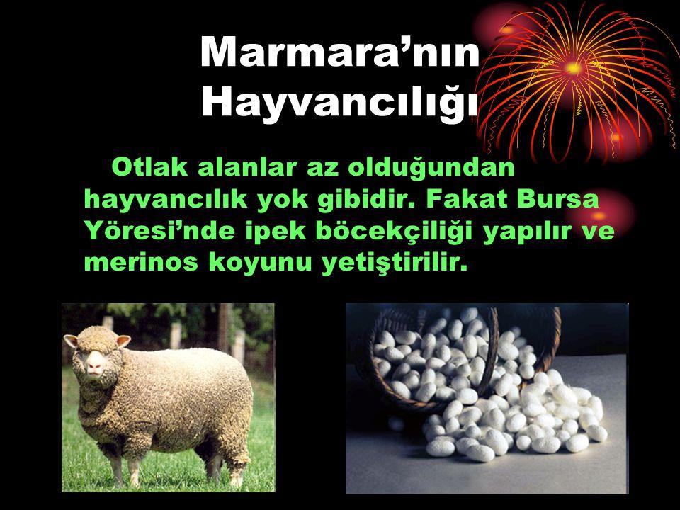 Marmara'nın Hayvancılığı Otlak alanlar az olduğundan hayvancılık yok gibidir. Fakat Bursa Yöresi'nde ipek böcekçiliği yapılır ve merinos koyunu yetişt