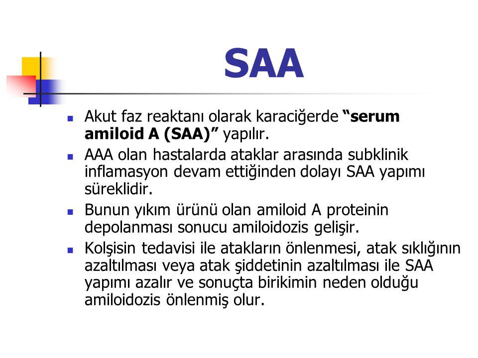 """SAA Akut faz reaktanı olarak karaciğerde """"serum amiloid A (SAA)"""" yapılır. AAA olan hastalarda ataklar arasında subklinik inflamasyon devam ettiğinden"""