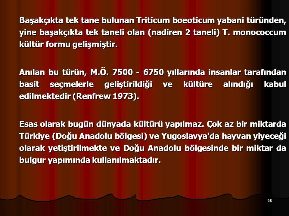 68 Başakçıkta tek tane bulunan Triticum boeoticum yabani türünden, yine başakçıkta tek taneli olan (nadiren 2 taneli) T.