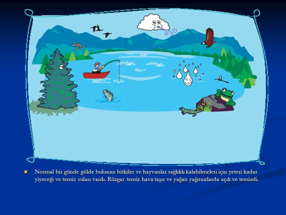Normal bir günde gölde bulunan bitkiler ve hayvanlar sağlıklı kalabilmeleri için yeteri kadar yiyeceği ve temiz suları vardı. Rüzgar temiz hava taşır