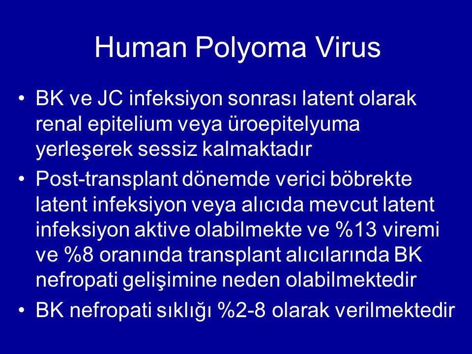 Human Polyoma Virus BK ve JC infeksiyon sonrası latent olarak renal epitelium veya üroepitelyuma yerleşerek sessiz kalmaktadır Post-transplant dönemde verici böbrekte latent infeksiyon veya alıcıda mevcut latent infeksiyon aktive olabilmekte ve %13 viremi ve %8 oranında transplant alıcılarında BK nefropati gelişimine neden olabilmektedir BK nefropati sıklığı %2-8 olarak verilmektedir