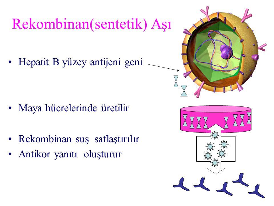 Hepatit B yüzey antijeni geni Maya hücrelerinde üretilir Rekombinan suş saflaştırılır Antikor yanıtı oluşturur Rekombinan(sentetik) Aşı