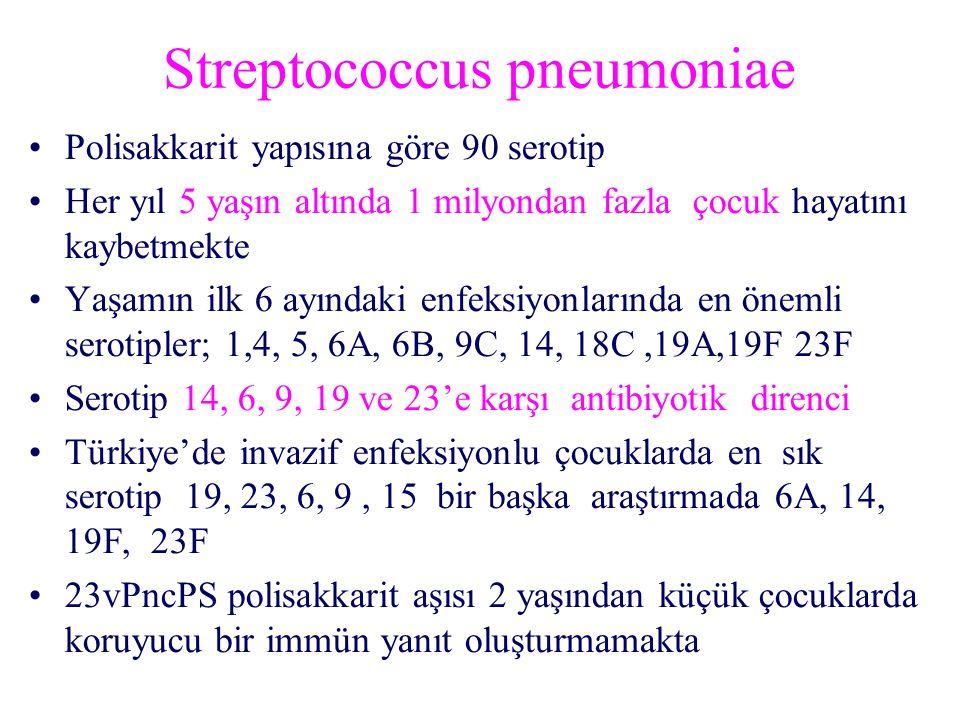 Streptococcus pneumoniae Polisakkarit yapısına göre 90 serotip Her yıl 5 yaşın altında 1 milyondan fazla çocuk hayatını kaybetmekte Yaşamın ilk 6 ayındaki enfeksiyonlarında en önemli serotipler; 1,4, 5, 6A, 6B, 9C, 14, 18C,19A,19F 23F Serotip 14, 6, 9, 19 ve 23'e karşı antibiyotik direnci Türkiye'de invazif enfeksiyonlu çocuklarda en sık serotip 19, 23, 6, 9, 15 bir başka araştırmada 6A, 14, 19F, 23F 23vPncPS polisakkarit aşısı 2 yaşından küçük çocuklarda koruyucu bir immün yanıt oluşturmamakta