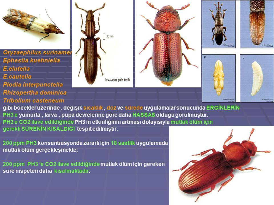 Oryzaephilus surinamensis Ephestia kuehniella E.elutella E.cautella Plodia interpunctella Rhizopertha dominica Tribolium casteneum gibi böcekler üzeri