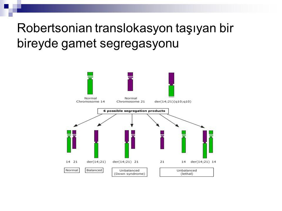 Robertsonian translokasyon taşıyan bir bireyde gamet segregasyonu