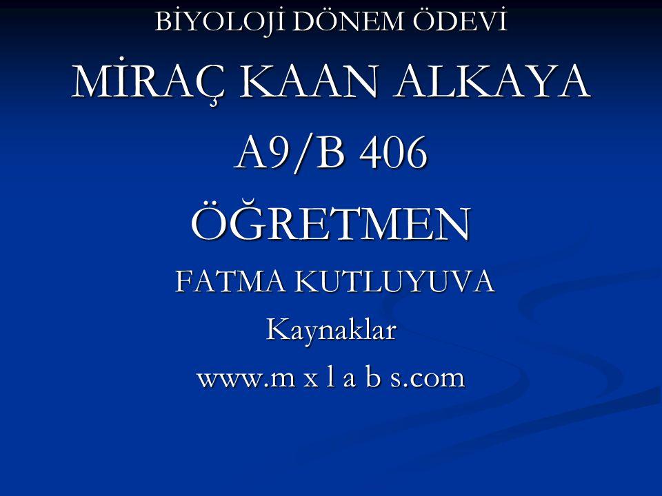 BİYOLOJİ DÖNEM ÖDEVİ MİRAÇ KAAN ALKAYA A9/B 406 ÖĞRETMEN FATMA KUTLUYUVA FATMA KUTLUYUVAKaynaklar www.m x l a b s.com
