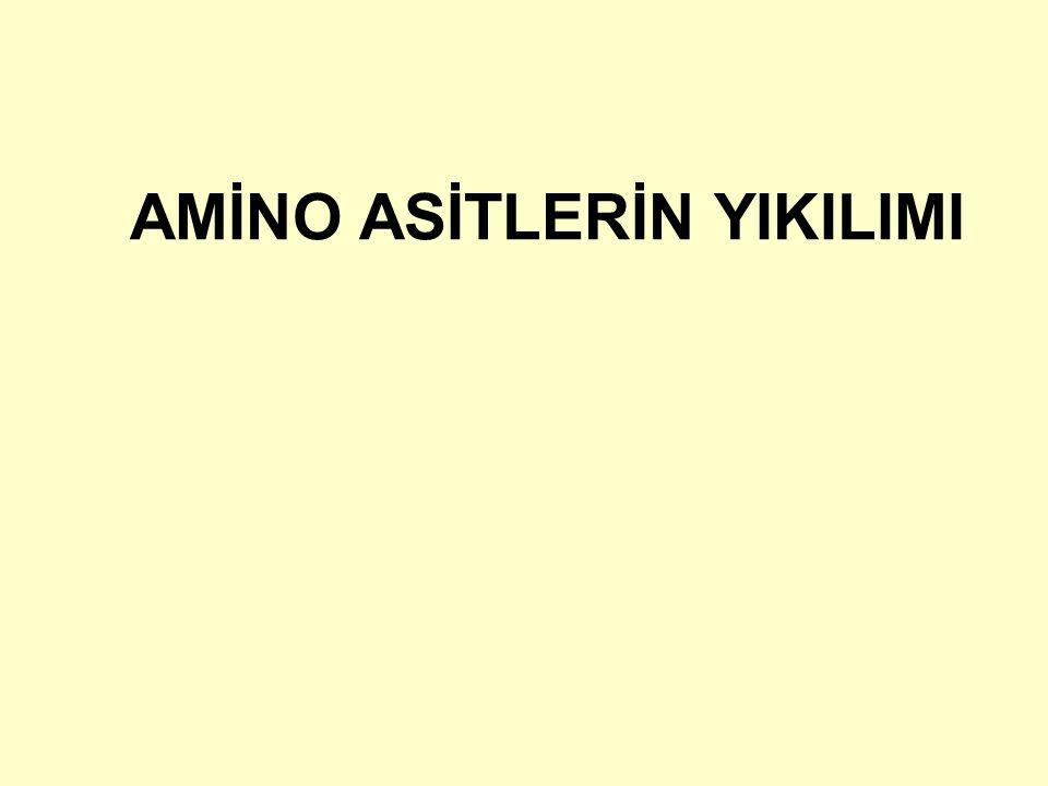 52 Asparajin Aspartik asidin amino grubuna komşu olmayan karboksil grubunun amidleşmesiyle oluşur.