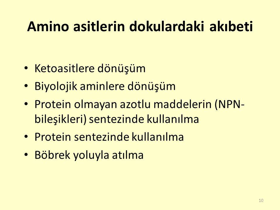 10 Amino asitlerin dokulardaki akıbeti Ketoasitlere dönüşüm Biyolojik aminlere dönüşüm Protein olmayan azotlu maddelerin (NPN- bileşikleri) sentezinde