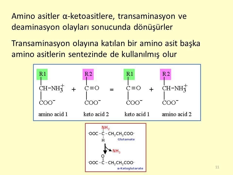 11 Amino asitler α-ketoasitlere, transaminasyon ve deaminasyon olayları sonucunda dönüşürler Transaminasyon olayına katılan bir amino asit başka amino