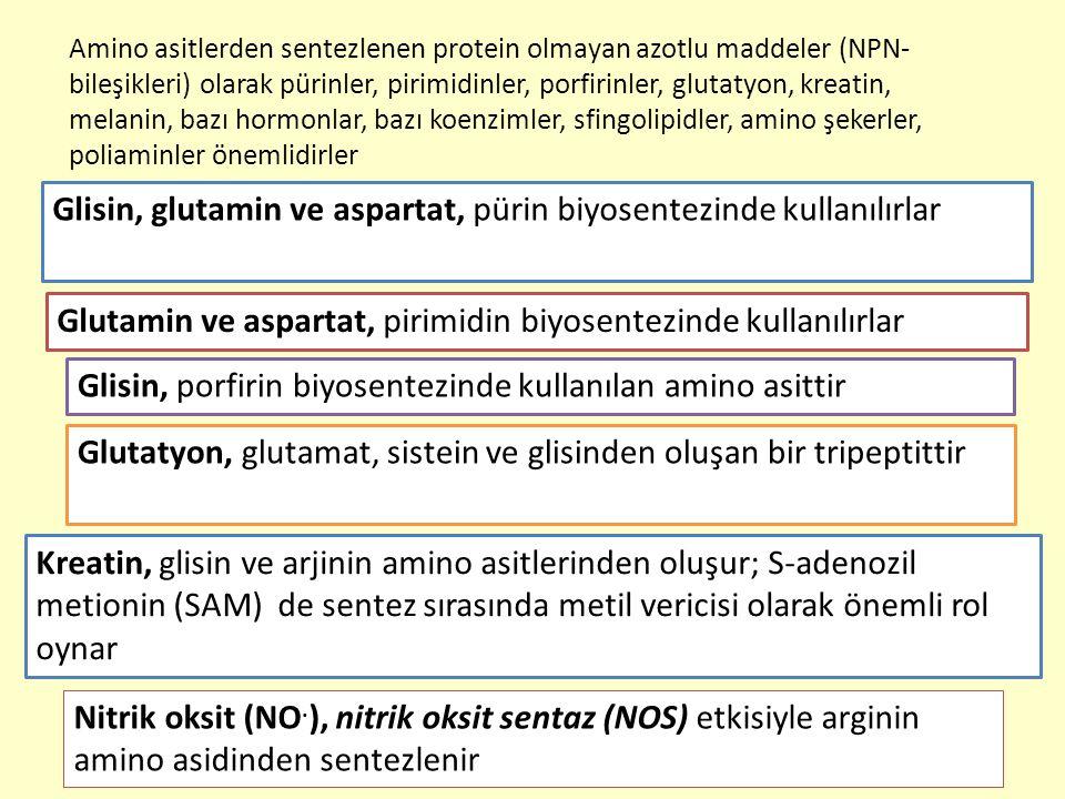 13 Amino asitlerden sentezlenen protein olmayan azotlu maddeler (NPN- bileşikleri) olarak pürinler, pirimidinler, porfirinler, glutatyon, kreatin, mel