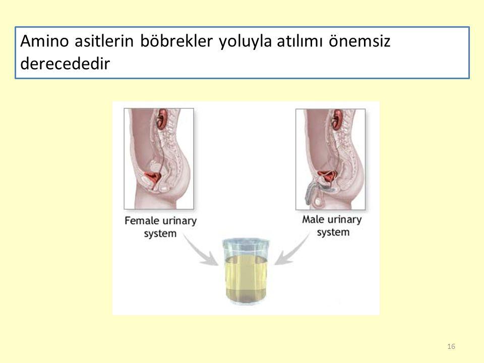 16 Amino asitlerin böbrekler yoluyla atılımı önemsiz derecededir