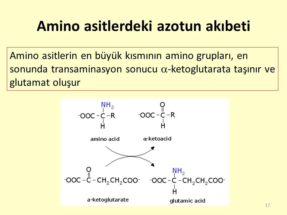 17 Amino asitlerdeki azotun akıbeti Amino asitlerin en büyük kısmının amino grupları, en sonunda transaminasyon sonucu  -ketoglutarata taşınır ve glu