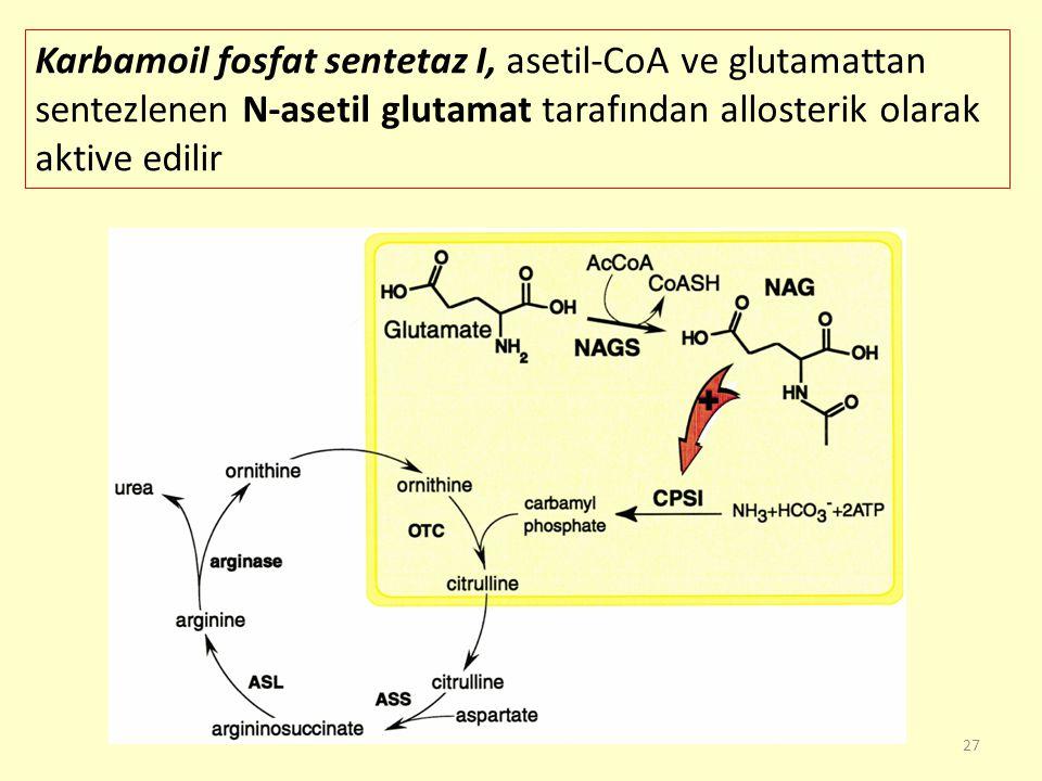 27 Karbamoil fosfat sentetaz I, asetil-CoA ve glutamattan sentezlenen N-asetil glutamat tarafından allosterik olarak aktive edilir