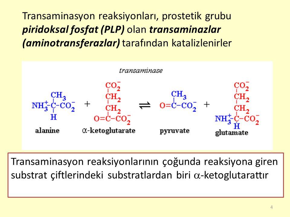 4 Transaminasyon reaksiyonları, prostetik grubu piridoksal fosfat (PLP) olan transaminazlar (aminotransferazlar) tarafından katalizlenirler Transamina