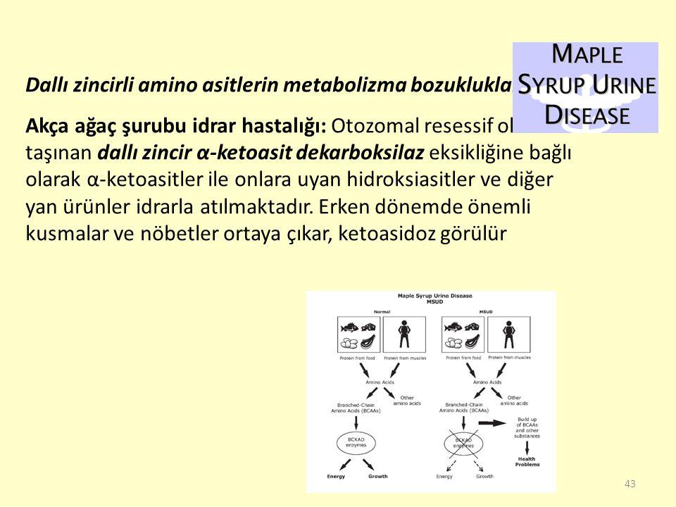 43 Dallı zincirli amino asitlerin metabolizma bozuklukları: Akça ağaç şurubu idrar hastalığı: Otozomal resessif olarak taşınan dallı zincir α-ketoasit