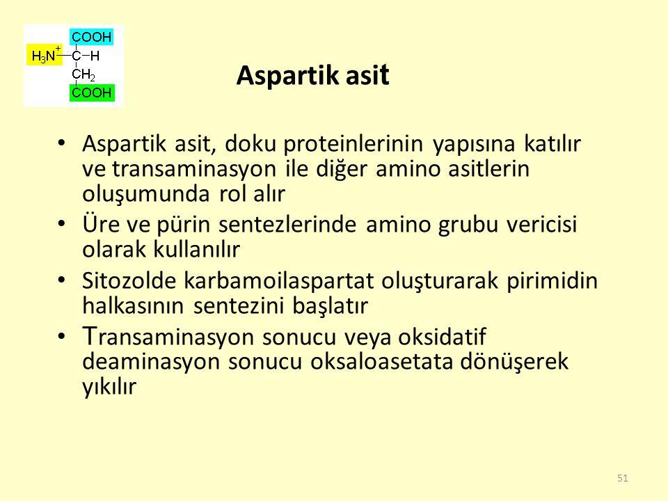 51 Aspartik asi t Aspartik asit, doku proteinlerinin yapısına katılır ve transaminasyon ile diğer amino asitlerin oluşumunda rol alır Üre ve pürin sen