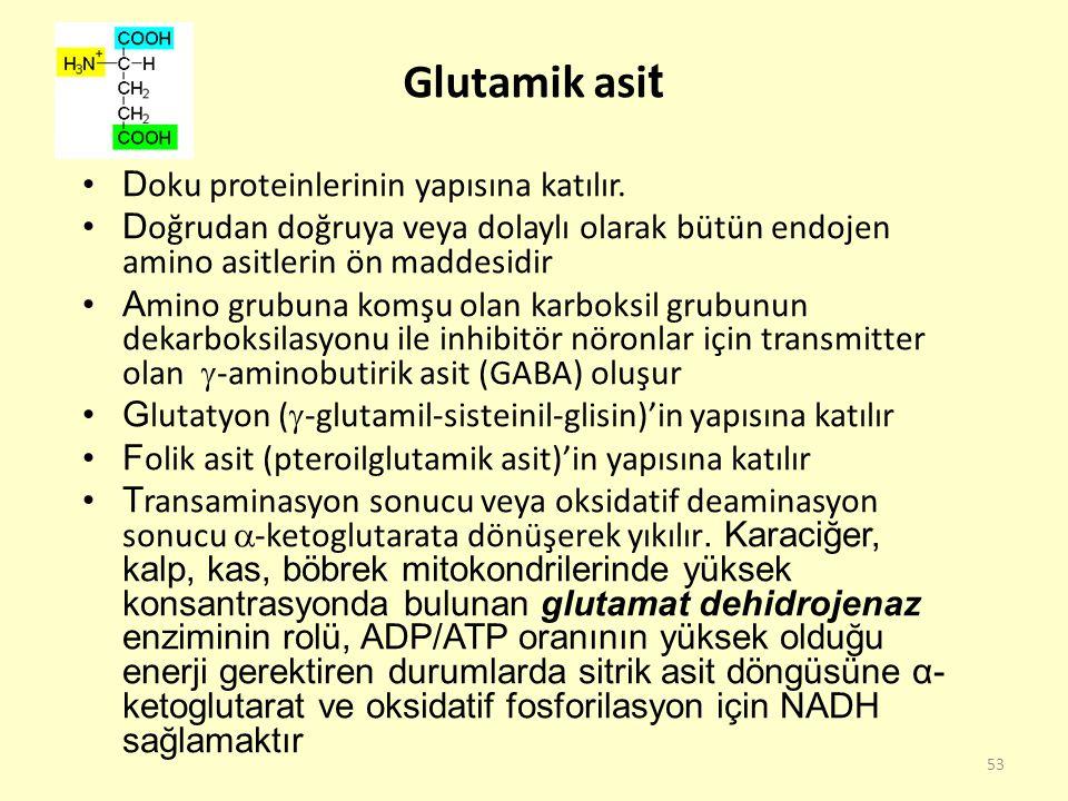 53 Glutamik asi t D oku proteinlerinin yapısına katılır. D oğrudan doğruya veya dolaylı olarak bütün endojen amino asitlerin ön maddesidir A mino grub