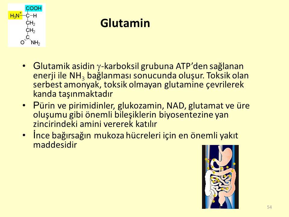 54 Glutamin G lutamik asidin  -karboksil grubuna ATP'den sağlanan enerji ile NH 3 bağlanması sonucunda oluşur. Toksik olan serbest amonyak, toksik ol