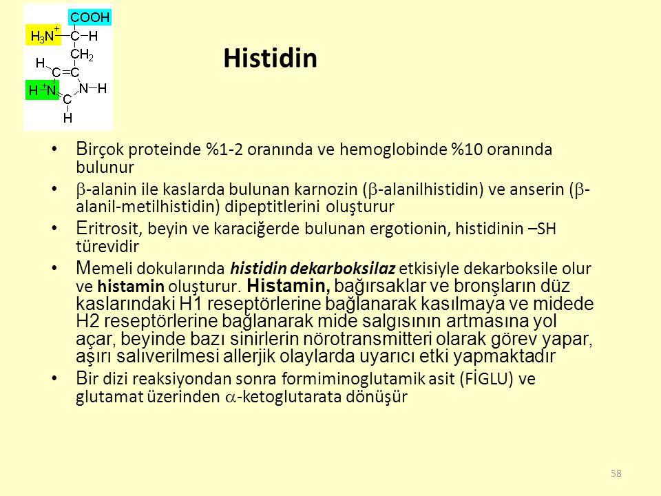 58 Histidin B irçok proteinde %1-2 oranında ve hemoglobinde %10 oranında bulunur  -alanin ile kaslarda bulunan karnozin (  -alanilhistidin) ve anser